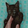 gatta nera