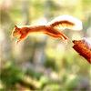 leesa_perrie: Squirrel 1