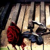 piano bleeding rose