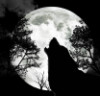 darkwolfmoon