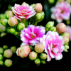 flowers_blog userpic