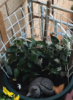 a_mad_gardener userpic