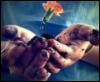 руки мои
