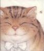 Кэл: Кот