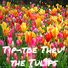 Tulips::tip toe