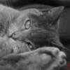 sindraa [userpic]