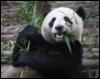 like_a_panda userpic