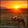 horses, country