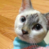 cat, kitten, cute