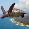 черепахер