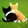 tracyj23: Love - kittens hugging