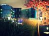 Ольга Таволга: street lights