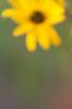 rebekahzellers userpic