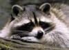 furryrider userpic