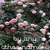 roses::by any other name