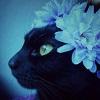 kaleidowitch userpic