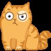 возмущенный котик