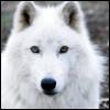 shewolf_dreamer userpic