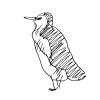 пингвин 2