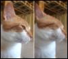 huggerofcats userpic