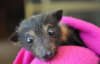 lemur_ userpic