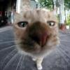 Kat_kat