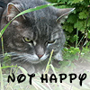 tallihensia userpic