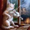 кот играет на скрипке