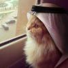 котятина
