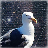 seagull2eagle userpic