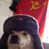 cão comunista