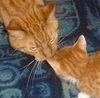 Harry and Reuben