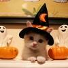 Halloween puss