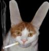 Ушастый кот с сигаретой