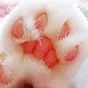 STOCK: kitty paw