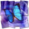 icona777 userpic