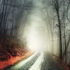 lijahlover: Autumn foggy road