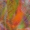 lijahlover: Autumn web