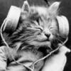 Радист Кот