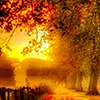 tracyj23: Fall leaves