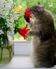 нюхает цветочки