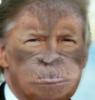 Trumpmonk