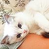 STOCK: white kitten