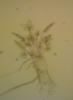 busyprocrasting userpic