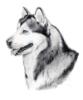 vlakoinen_koira userpic
