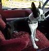 Winston In the Van