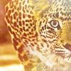 Leopard Pounce