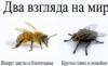 ПчелыМухи