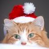рыжий новогодний