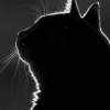 lilimurr userpic